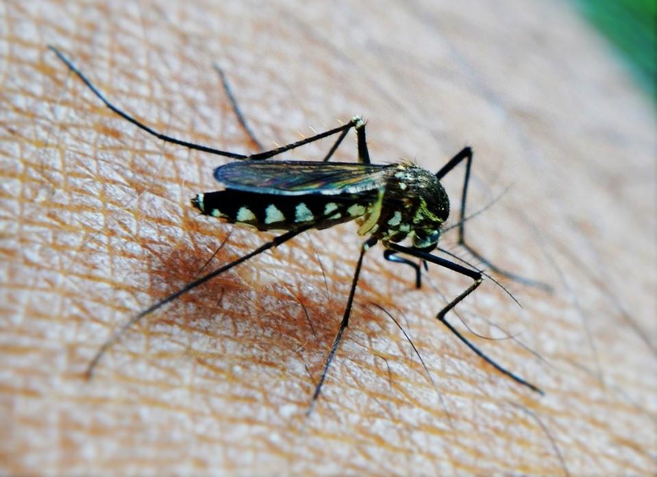 heilmittel gegen insektenstiche und juckreiz heilmittel und hausmittelheilmittel und hausmittel. Black Bedroom Furniture Sets. Home Design Ideas