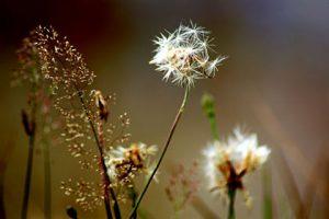 Hausmittel gegen Pollenallergie
