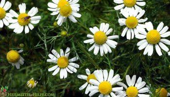 5 Heilpflanzen die in keiner Küche fehlen dürfen
